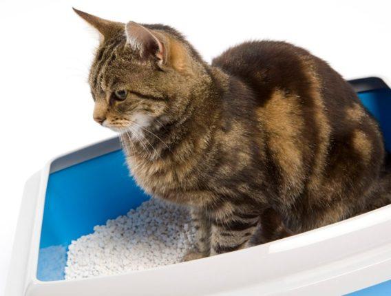 Urinegeur van huisdier verwijderen uit tapijt