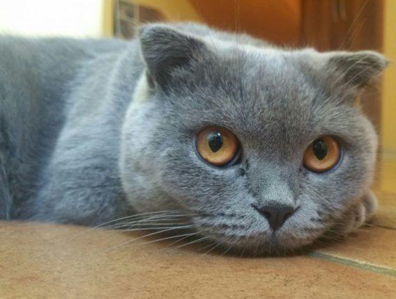 Waarom plast mijn kat in huis?